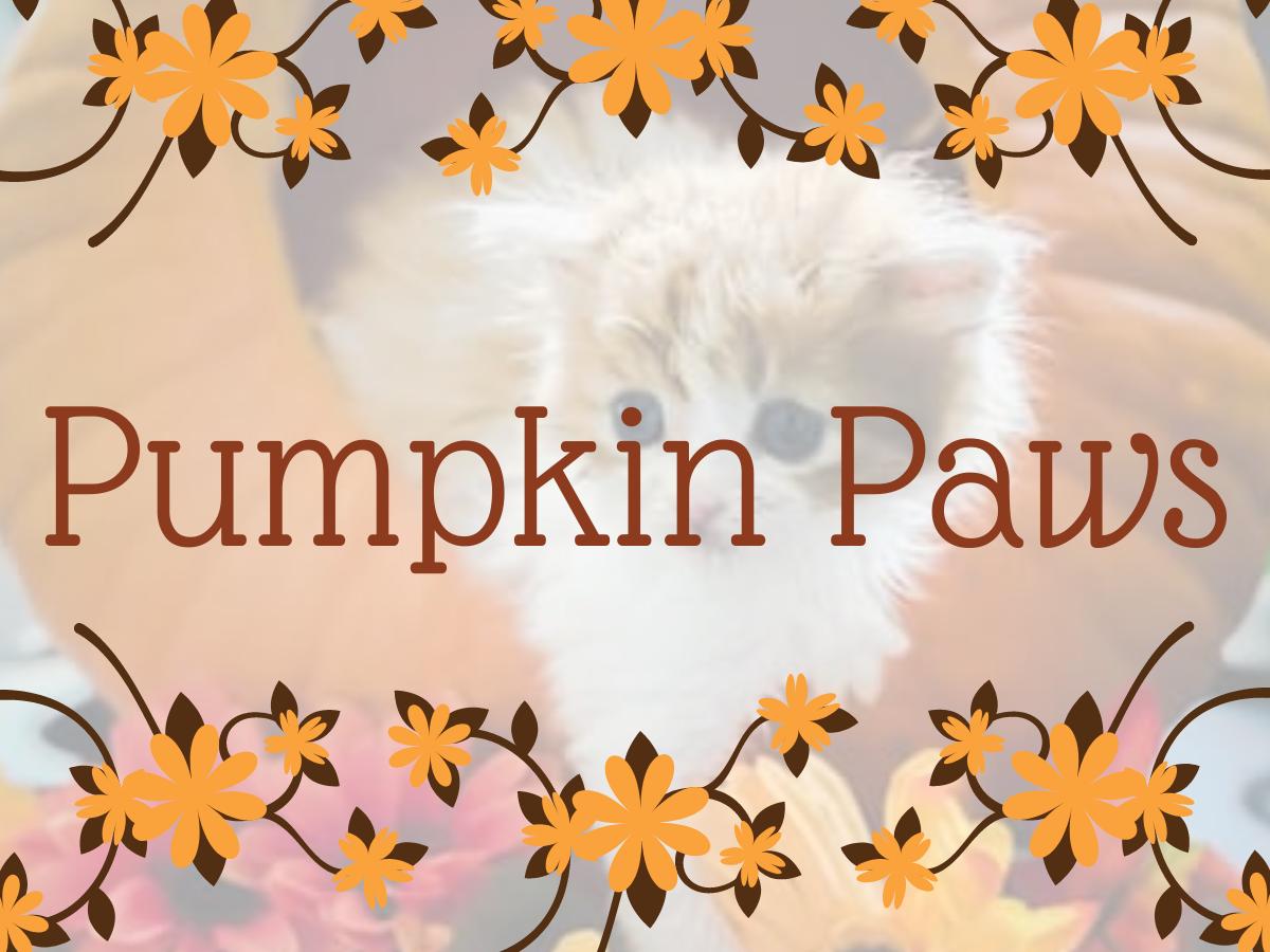 Pumpkin Paws thumbnail