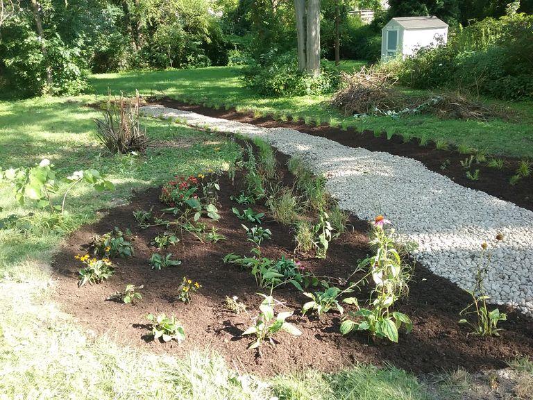 Planted rain garden